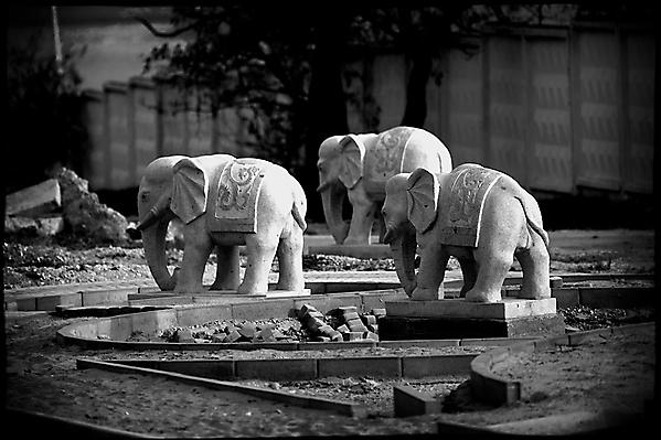 Куда идут слоны? ( ... Новороссийск - город слонов)