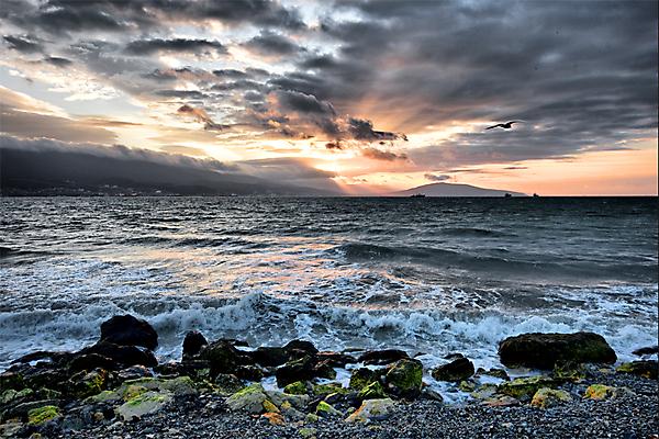 Море, чайка, рассвет