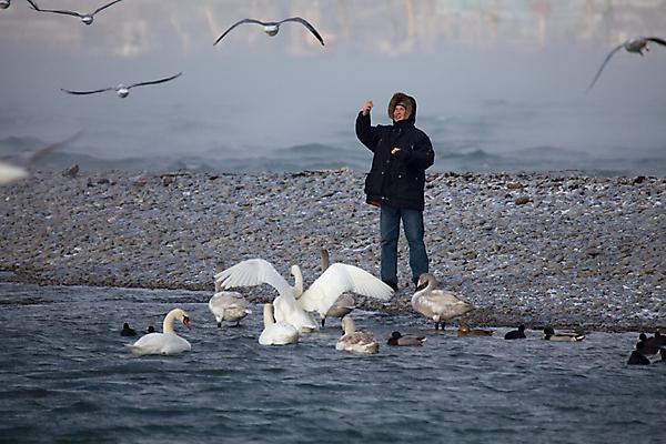 Про людей и лебедей