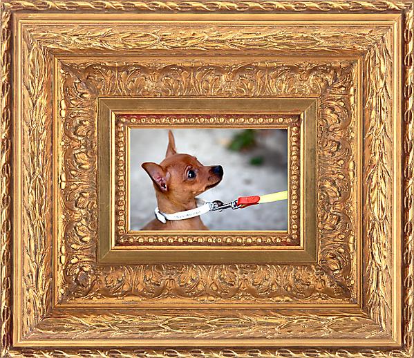 Картина про собаку