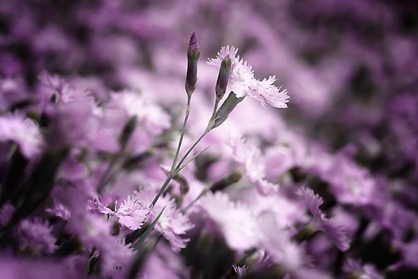 Любимая, все цветы мира для тебя!