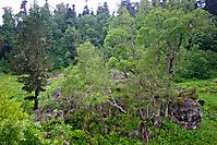 Лагонаки