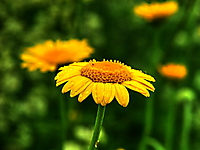 Про лесные цветы