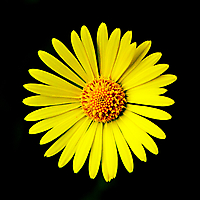 Цветок без названия