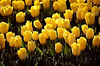 Про весенние цветы