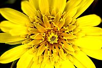 Про желтый цветок
