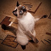 Любопытная котейка